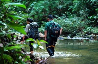 Sarawak National Park Tours