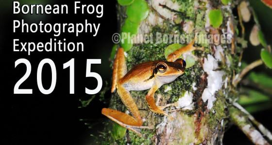 Borneo Frog Photography