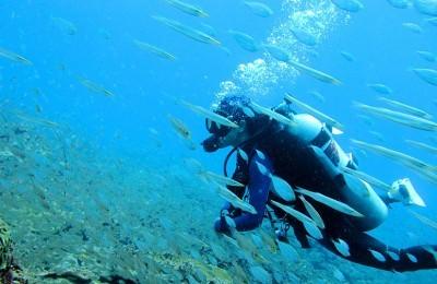Diving in Miri