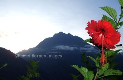 Mount Kinabalu Tours